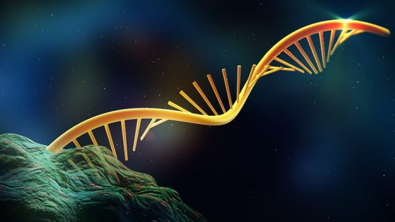 El ARN está de moda… desde hace 3 800 millones de años